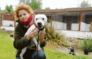 Crofters Kennels – Chrissie Lewis with Billy, who needs a home