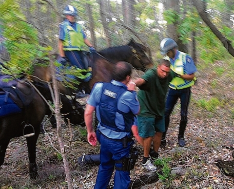 Members of the West Australia Mounted Police Section apprehend a suspect.