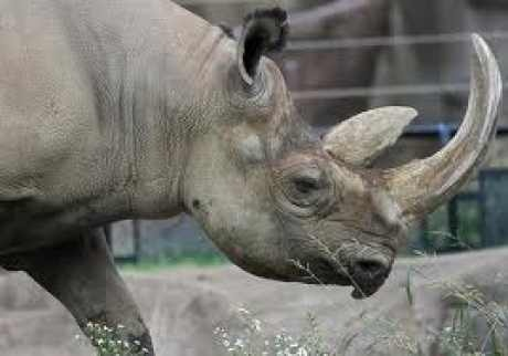 Two jailed for rhino horn theft
